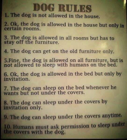 Dog Rules by simplesalmander