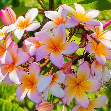 Summer Lovin' and island flowers by JeffFrank