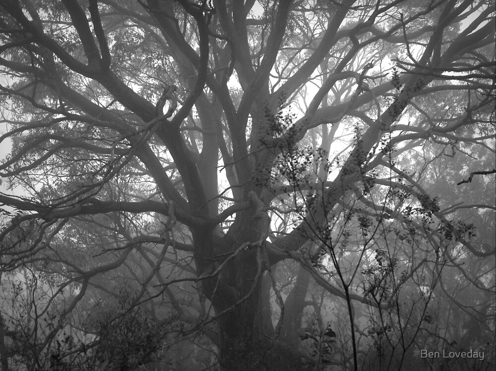 Scary Tree- Morialta Giant by Ben Loveday