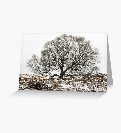 Surrounded by Winter Greeting Card