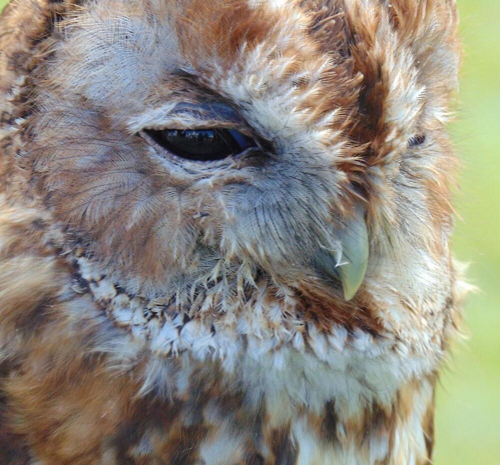Keeping A Close Eye On You - Tawny Owl by altonbear