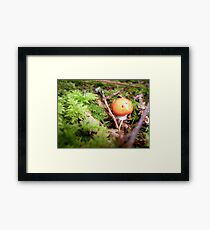Red cap.... Framed Print