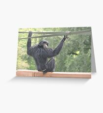 Swinging Siamang Greeting Card