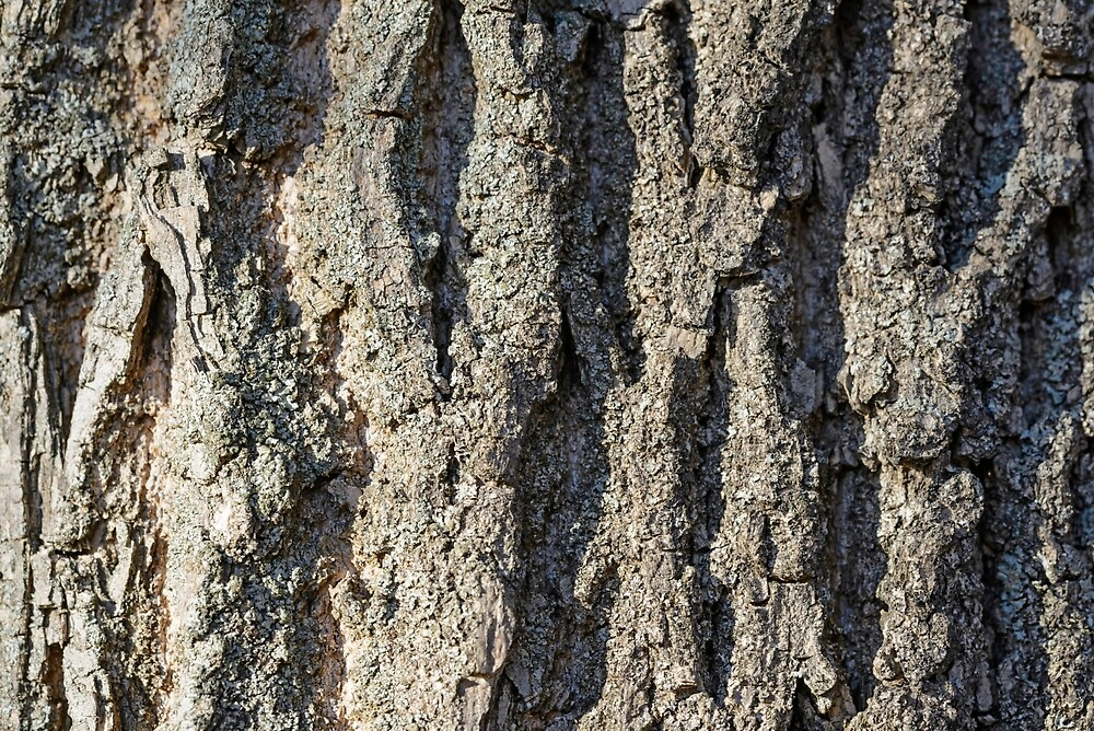 Detail on the bark of a big old tree by MaxalTamor