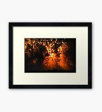 Summer Fog Framed Print