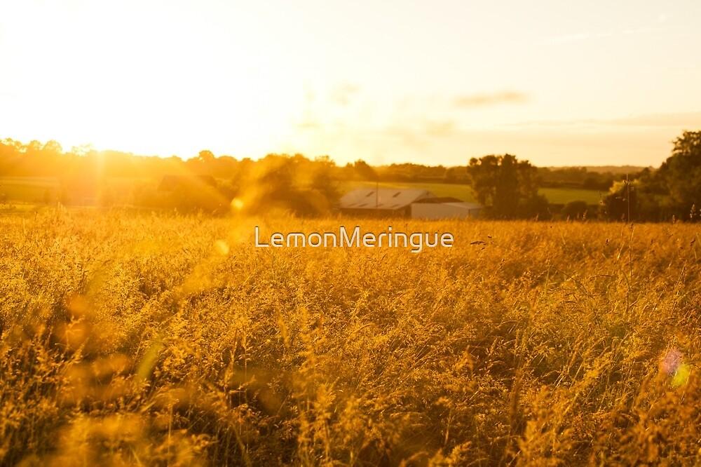 Warm, golden sunset over farm field  by LemonMeringue