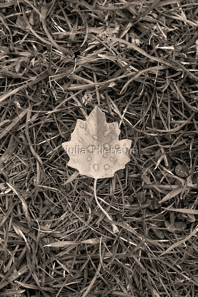 Fallen leaf by Julia  Hiebaum