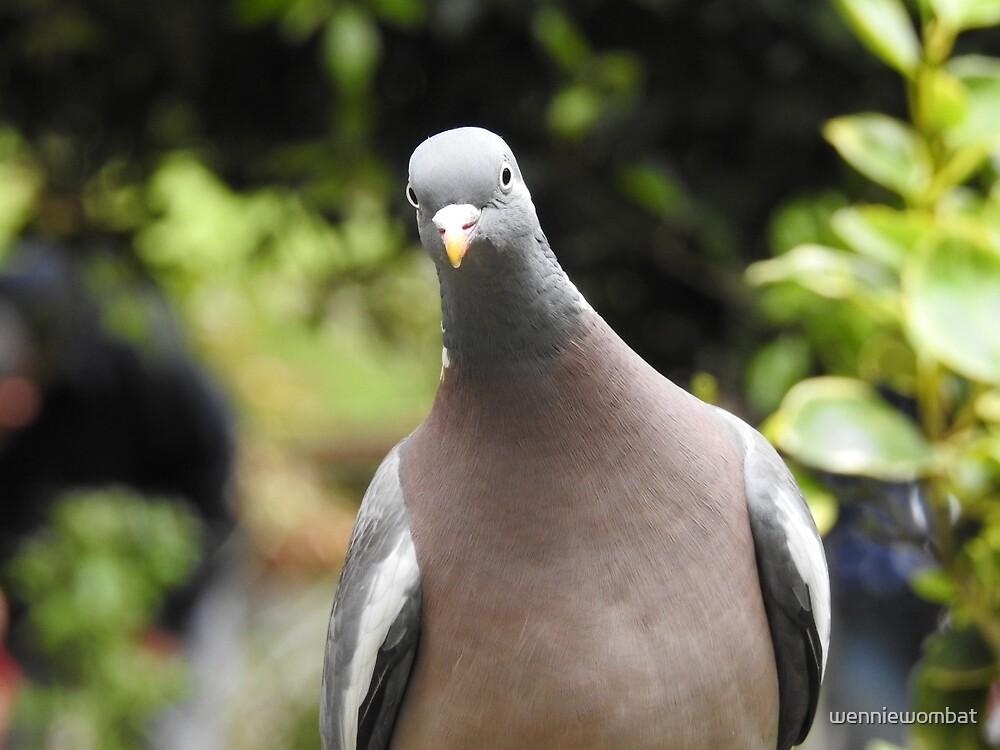 Nosy pigeon!! by wenniewombat
