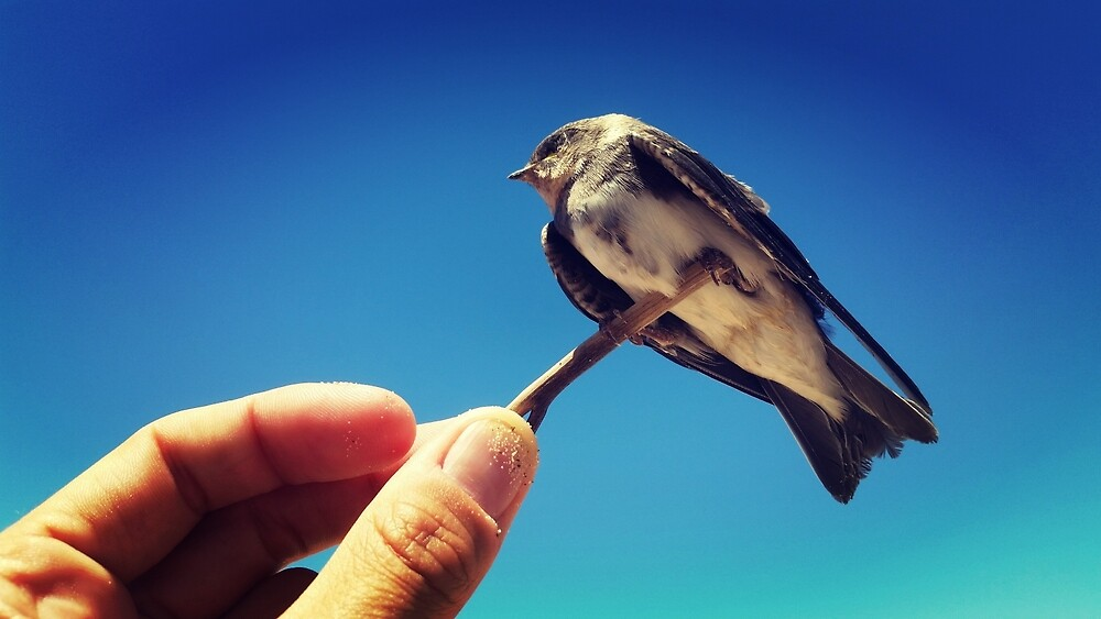 Northern Rough-winged Swallow by gatheringwonder