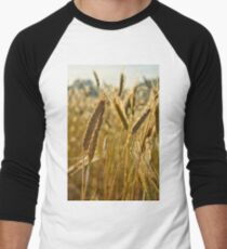 Ripening Wheat Men's Baseball ¾ T-Shirt