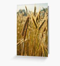 Ripening Wheat Greeting Card