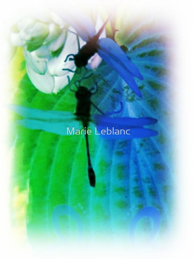 RAINBOW DRAGONFLIES by Marie Leblanc