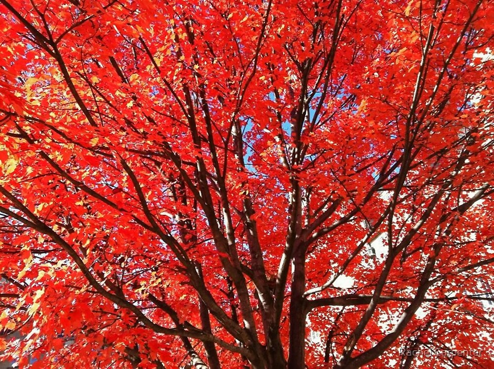 Fall in Red by Rachel Carpenter
