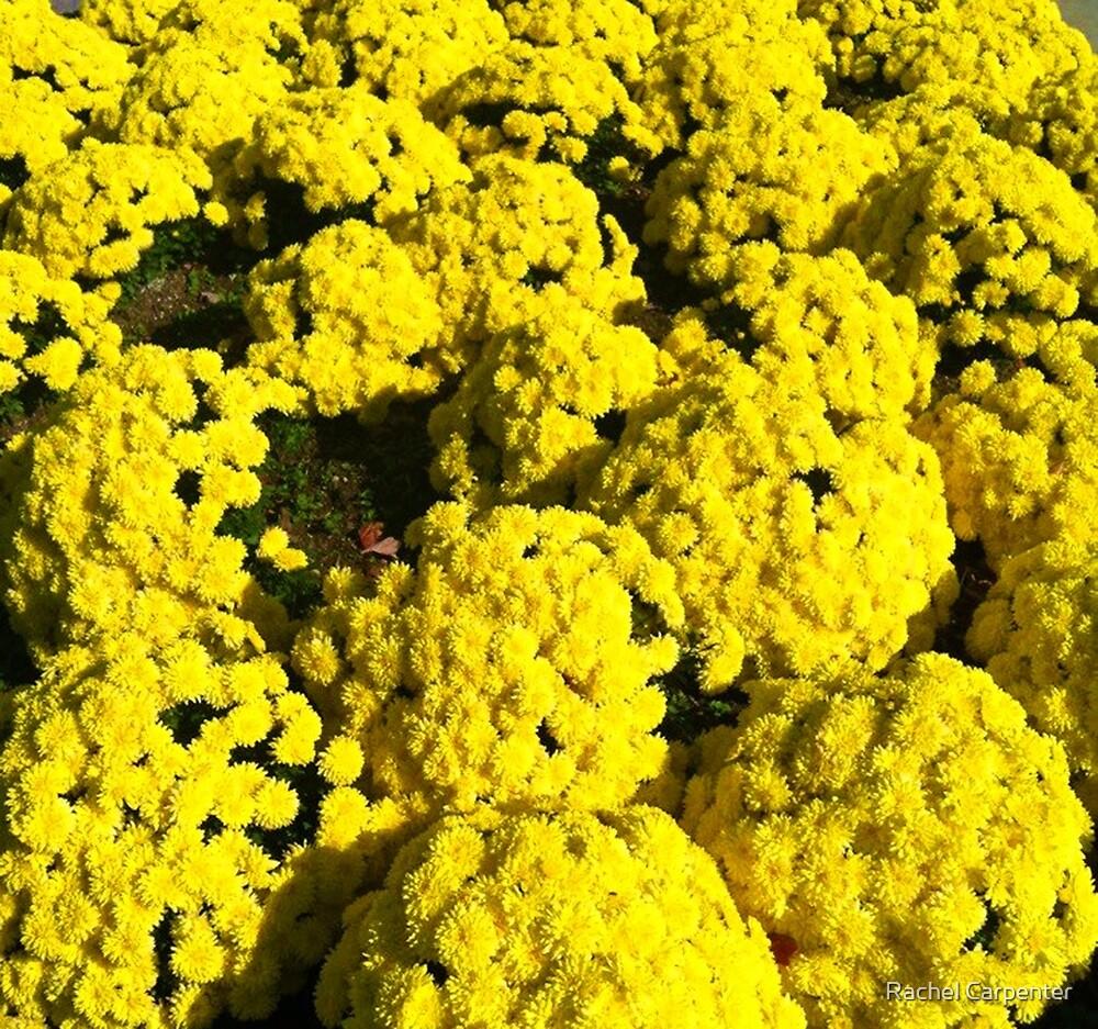 Fall in Yellow by Rachel Carpenter