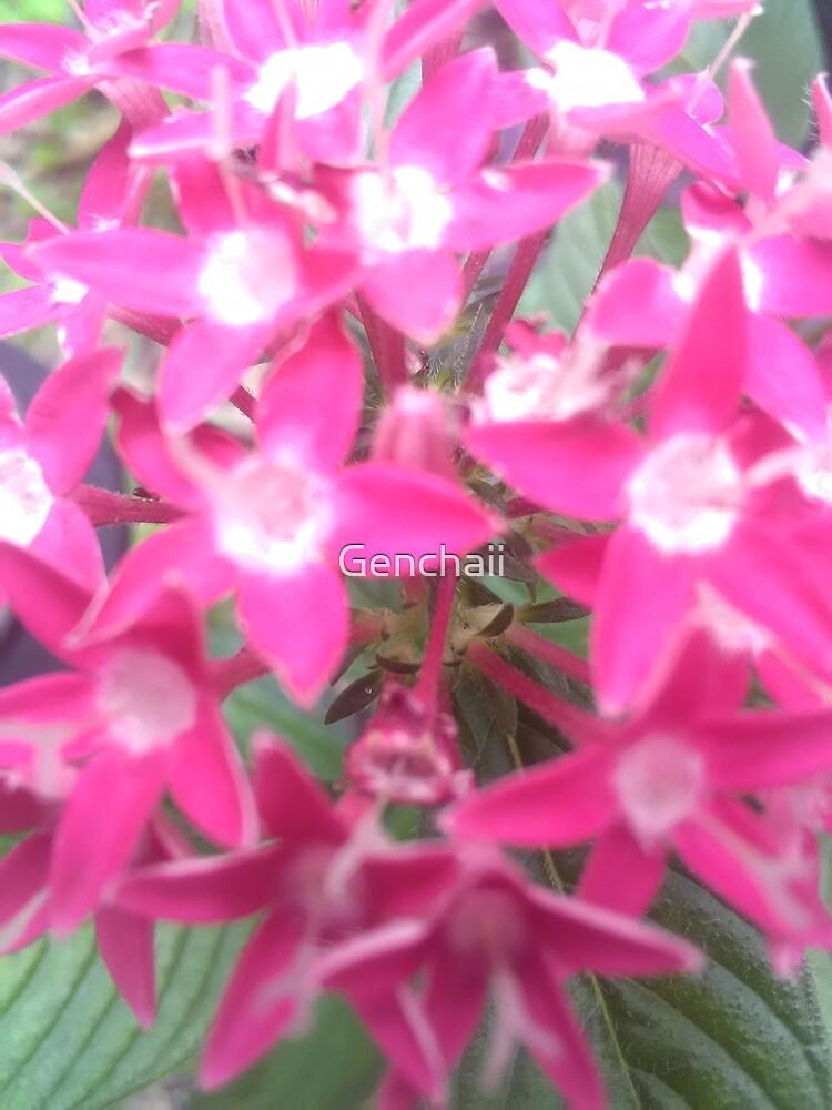 Pink Pentas  by Genchaii