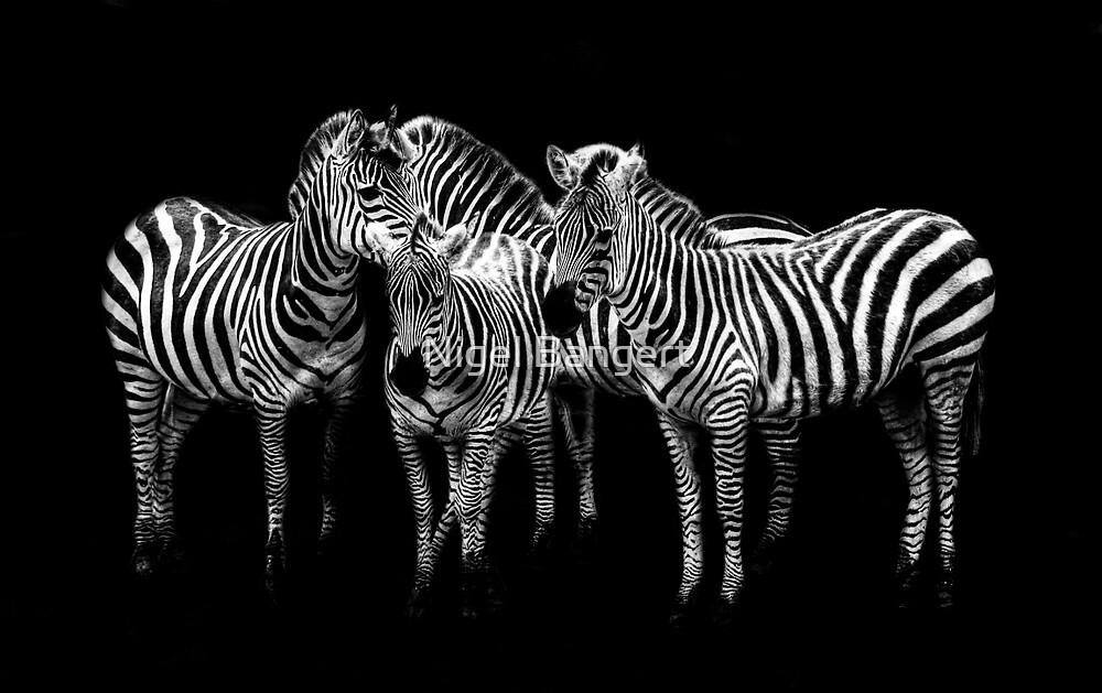 Zebras by Nigel Bangert