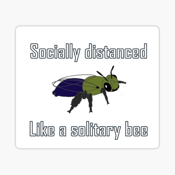 Socially distanced like a solitary bee Sticker