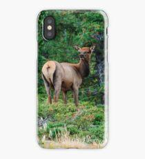 Juvenile Elk at Rocky Mountain National Park iPhone Case