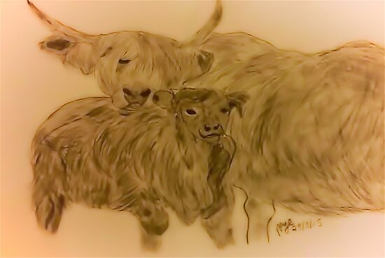 Highland Cattle  by Patricia Pye