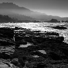Point Lobos by Mike Herdering
