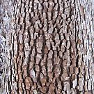 bark abstract by Bruce  Dickson