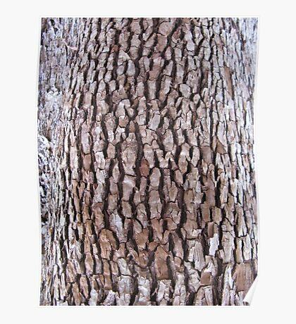 bark abstract Poster