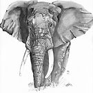 African Elephant by BruksSketches