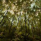 Wood Hall - Bowdown Woods by Samantha Higgs