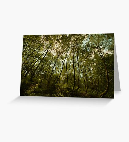 Wood Hall - Bowdown Woods Greeting Card