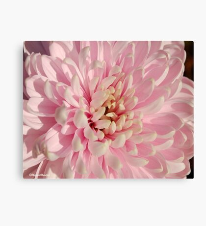 JUST PINK ! Canvas Print