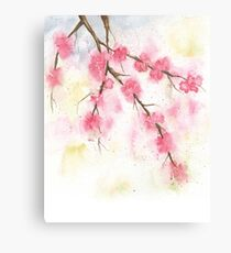 Watercolor Painting of Cherry Blossoms Spring  Canvas Print
