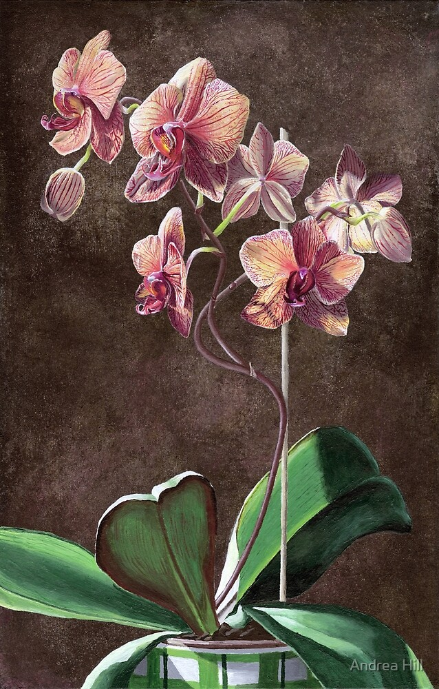 Kaleidoscope Phalaenopsis Orchid by Andrea Hill