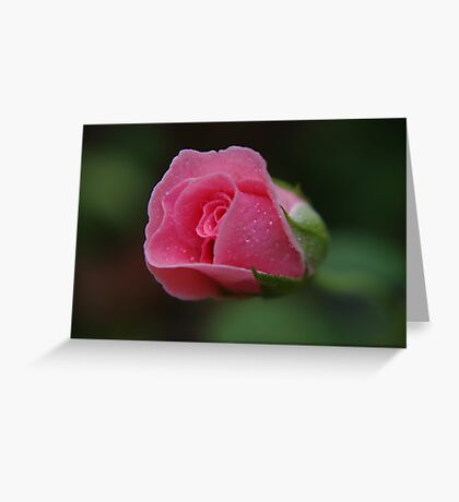 The rose called Dearest   Greeting Card