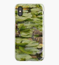 Mother Mallard with ducklings iPhone Case/Skin