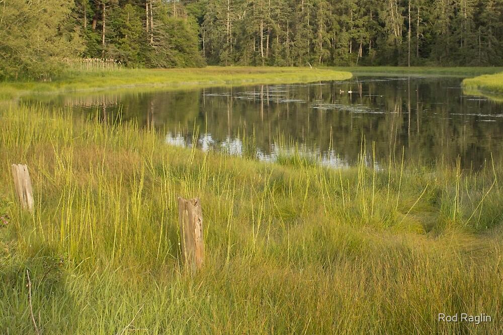 Evening sun, meandering river, marsh grass  by Rod Raglin