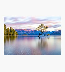 That Wanaka Tree Photographic Print