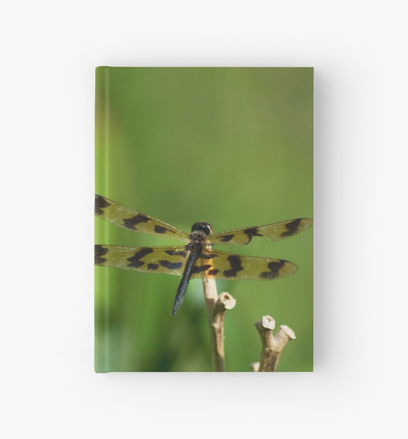 Banded Flutterer Dragonfly  by Lauren Shawyer