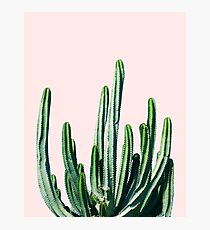 Cactus V6 #redbubble #lifestyle Photographic Print