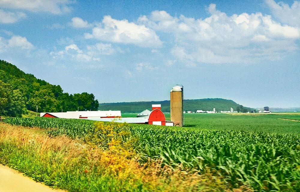 Corn Country by Nadya Johnson