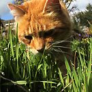 Ginger cat sniffing grass in garden by turniptowers
