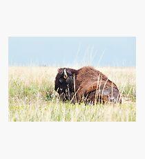 American Bison Photographic Print