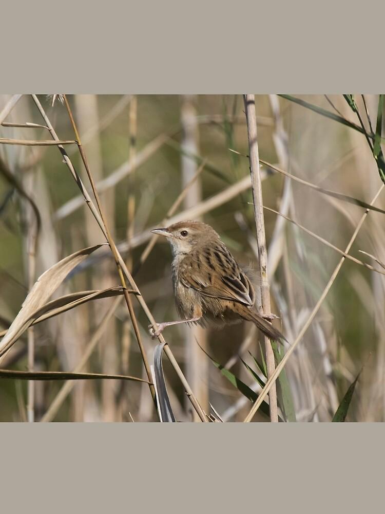 Reed Skulking by byronbackyard