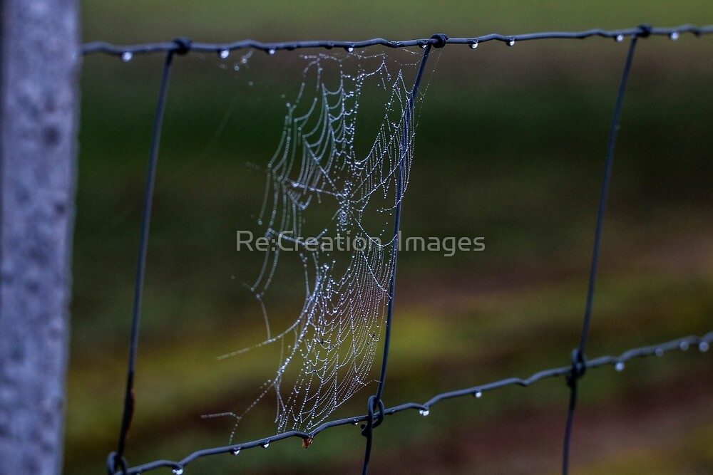 Fence Web in the Morning Dew by Re:Creation  Images