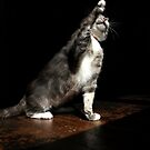Overdramatic cat by turniptowers