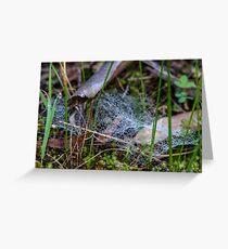 Dewy Ground Web Greeting Card