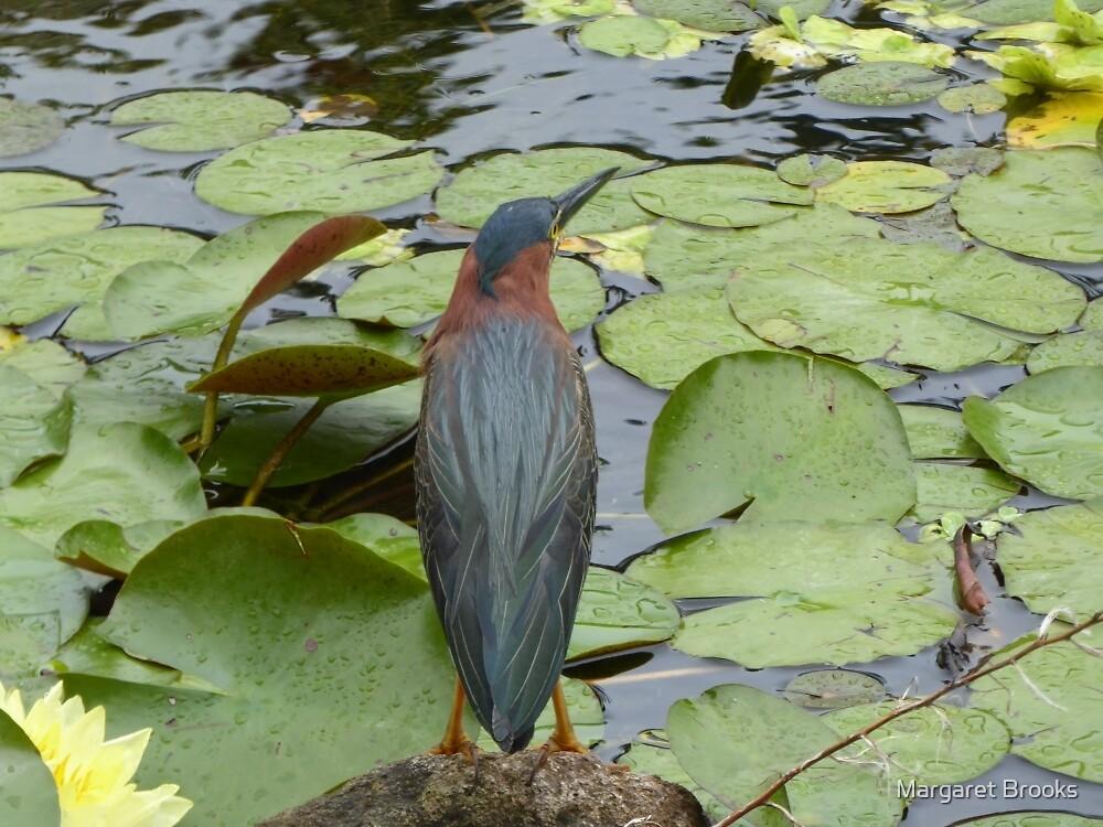 Nevis bird observes by Margaret Brooks