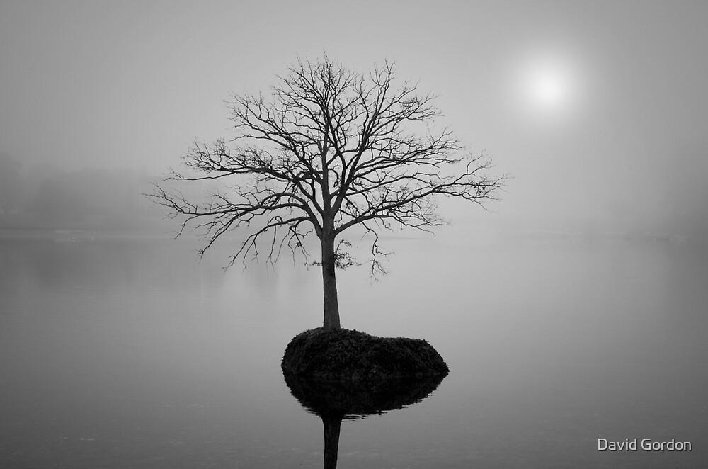 Morning Tranquility by David Gordon