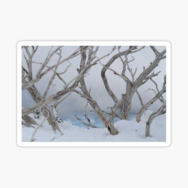 SNOW TREES Sticker