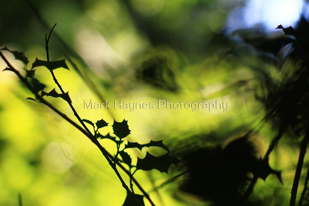 Tunnel of Light - Holly Wood Bokeh by Mark Haynes Photography