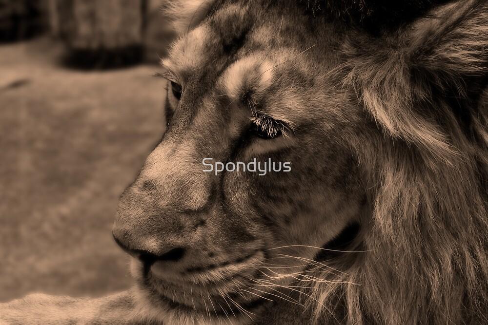 lion's portrait by Spondylus